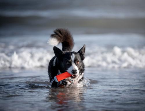 Dierfysiotherapie & natuurlijke diergezondheidszorg: iets voor jouw hond?